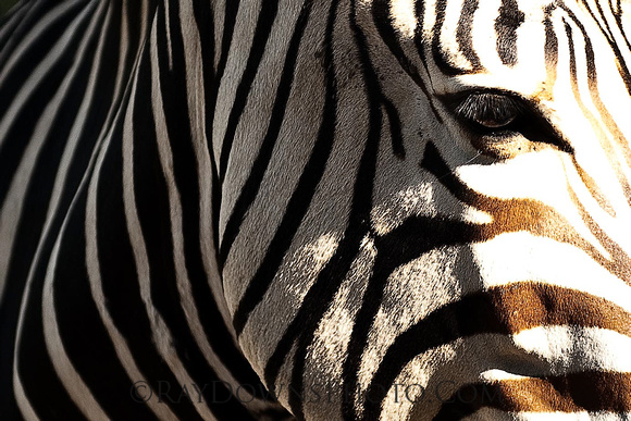 zebra larger file 29
